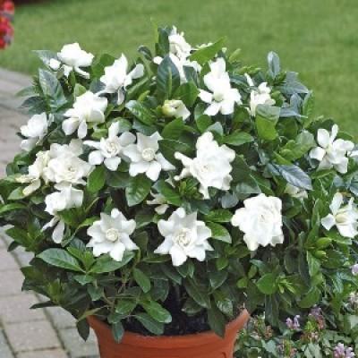 Top 10 Fragrant Plants