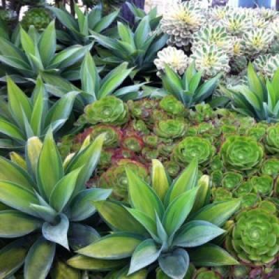 Top 10 Hardy Plants
