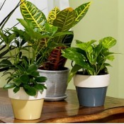 Top 20 Indoor Plants
