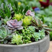 Top 20 Succulent Plants