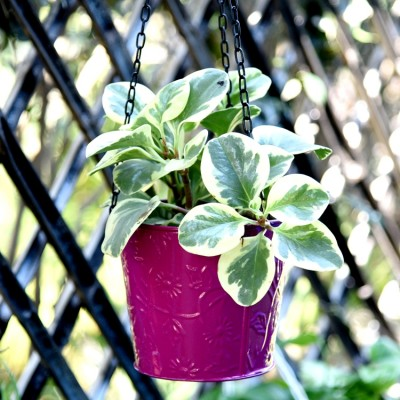 Balcony Hanging Metal Bucket Pink