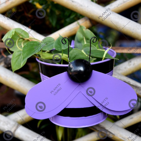 Bee Purple Metal Hook, Railing Planter
