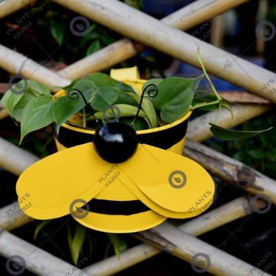 Bee Yellow Metal Hook, Railing Planter