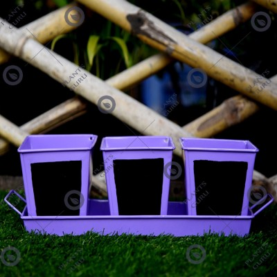 Herb Set Chalk Board Metal Planter Purple