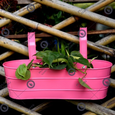 Metal Oval Railing Planter Pink
