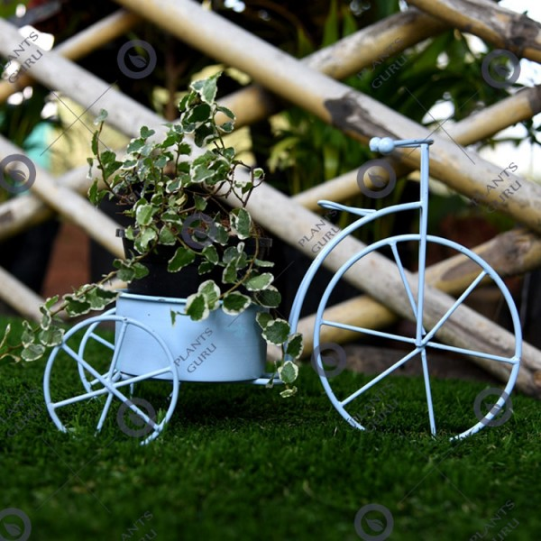 Plant Container Blue Cycle