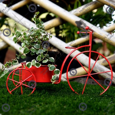 Plant Container Red Cycle