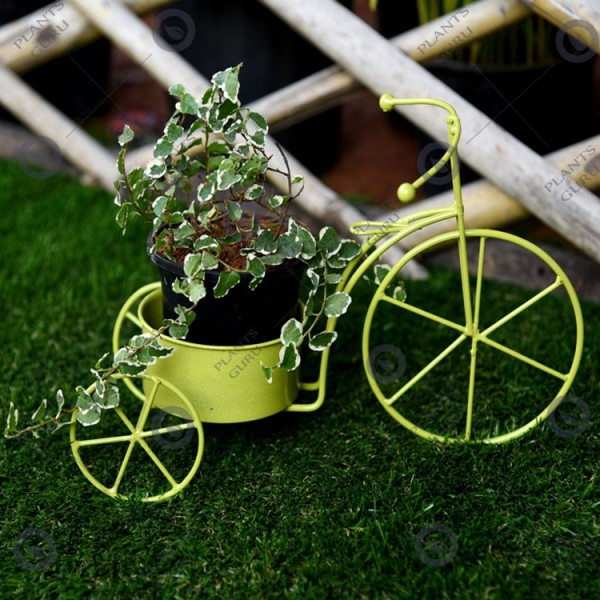 Plant Container Yellow Cycle