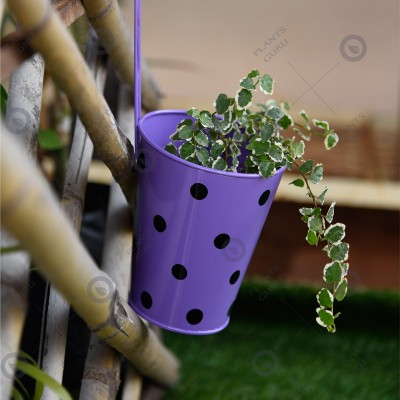 Polka Dots Railing Metal Planter Purple