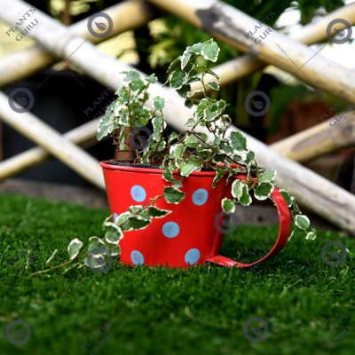 Cup metal planter red small