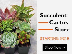 Buy Plants Online In India Live Plant Nursery Shop Shop